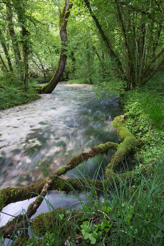 Ruisseau de la Manoise, en aval de sa source au cul du cerf. Eaux froides et limpides.