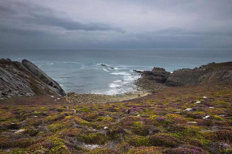 Côte au vent au nord du cap de la chèvre (presqu'île de Crozon). Lande à ajoncs, à callune et à bruyère cendrée.