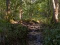 Ruisseau tufeux