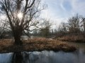 Marne aux environs de Matougues. Bras mort à l'extérieur d'un méandre. Eau stagnante glacée au petit matin.