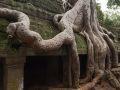 Galerie couverte prisonière des racines