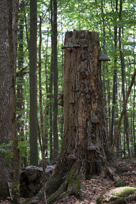 Chandelle couverte de champignons