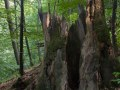 Chandelle (arbre creux)