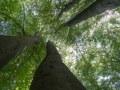 Collectif de hêtres