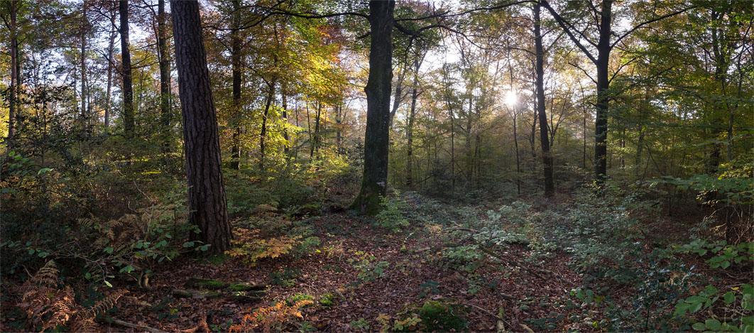 Peuplement mélangé de chêne sessile, hêtre et pins sylvestre sur argiles à meulière.