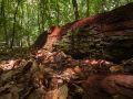 Vieux tronc en décomposition