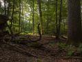 Très gros bois de chêne