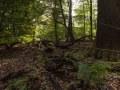 Branches et tronc au sol