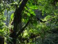 Nombreuses plantes épiphytes sur une branche