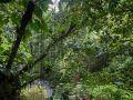 Chemin vers le Trou à Diable, forêt dense sur les pentes descendant vers la rivière Bourceau.