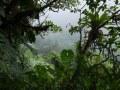 Vers les chutes du Carbet, forêt ombrophile dans le brouillard. Présence de nombreuses épiphytes (ananas bois, notamment).