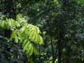 Chemin vers le Trou à Diable, jeune arbre dans le sous-bois après la pluie.
