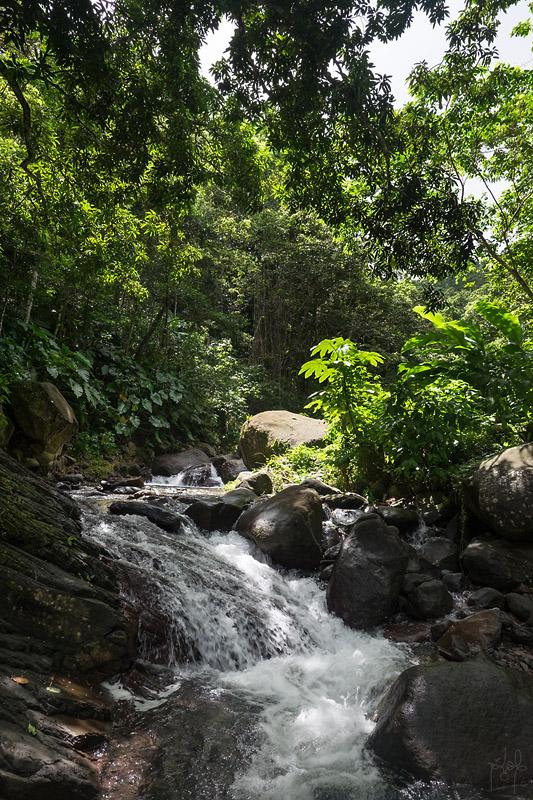 Cascade en forêt tropicale (rivière Bourceau).