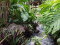 Rocher dans le ruisseau. Jardin botanique de Deshaies.
