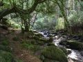 Ruisseau en sous-bois