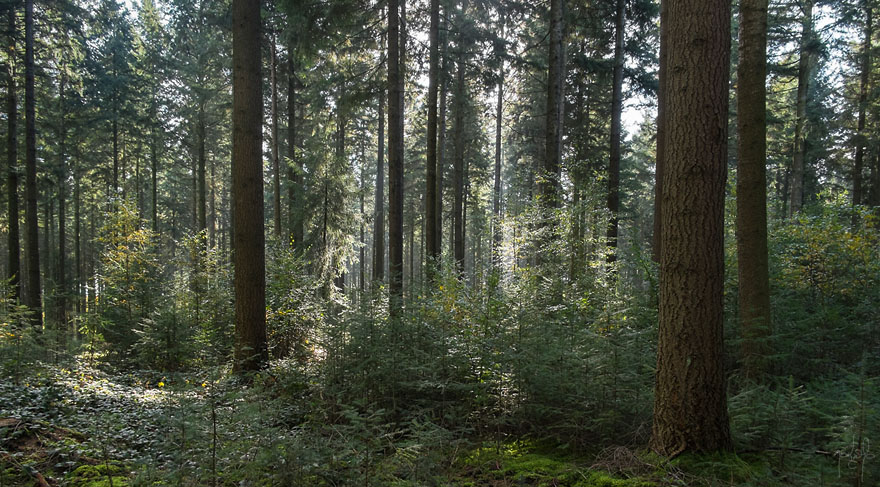 Jeux de lumi re photos cours forestiers et bandes dessin es for Haute futaie