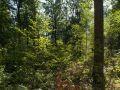 Régénération diffuse en sous-bois (chêne et hêtre)