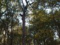 Arbre mort conservé dans un peuplement de chêne