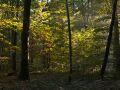 Forêt mélangée au petit matin