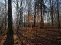 Lumière hivernale dans une forêt feuillue de plaine