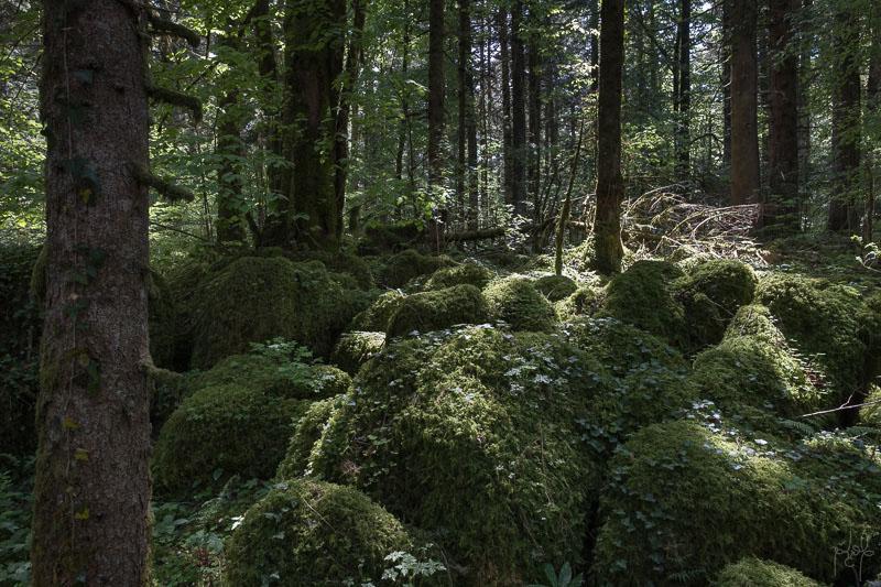 Rochers calcaires recouverts de mousse en sapinière-hêtraie