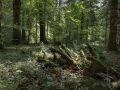 Bois mort au sol dans la réserve biologique de la Glacière.