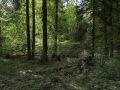 Bois mort au sol sous un bouquet de bois moyens dans la réserve biologique de la Glacière