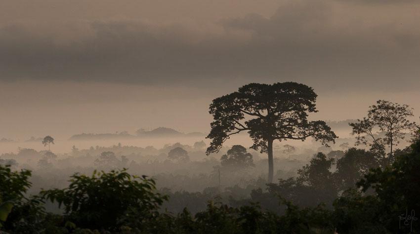 Vue sur la forêt tropicale