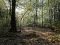 Gros bois en futaie irrégulière à chêne dominant. Seul le sous-étage de charme a débourré.
