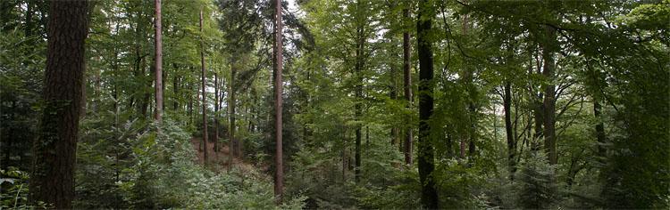 Forêt mixte dans les vosges grŽéseuses