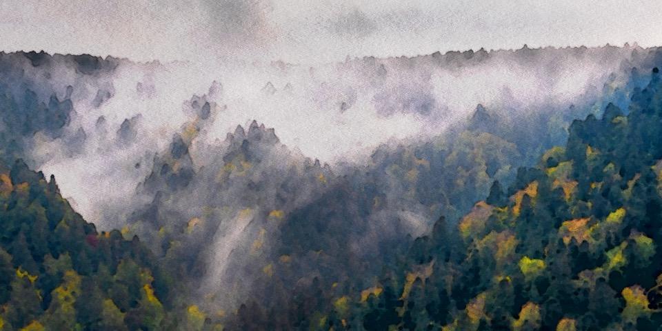 Hêtraie-sapinière d'ubac dans le massif du Sancy
